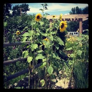 gardening-how